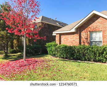 Exterior single-detached dwelling home in suburban Dallas-Fort Worth with attached garage. Autumn fall foliage with bright red maple color in Texas, America.