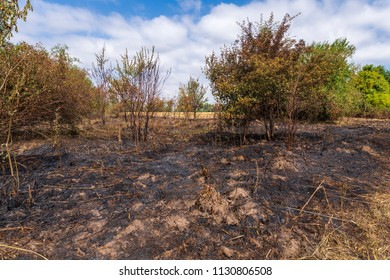Extinguished fire at the edge of a field