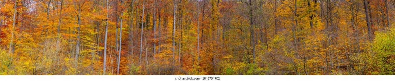 Extra wide autumn forest panorama with pleasant warm colors