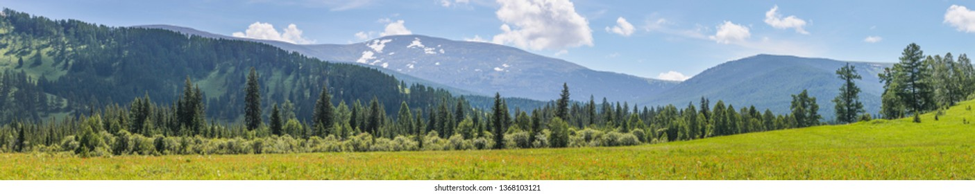 Extra wide panoramic view, spring landscape, Altay Mountains. Flowering meadow, forest and snow on the tops.
