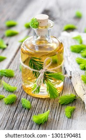 Extract of fresh shoots of spruce and fir