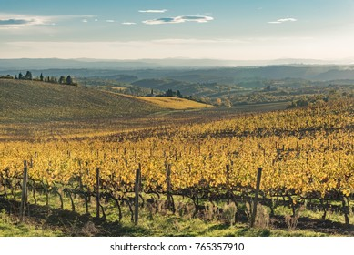extraordinary colorful autumn of the Chianti hills in the Province of Siena Italy with yellow geometric vineyards