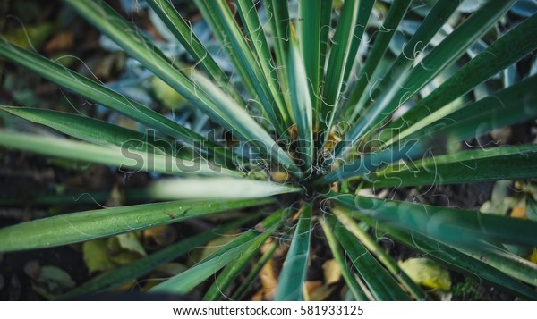 Extreme Close up of green grass with focus point.