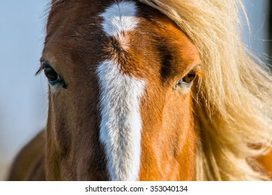 An extreme close up of a horse with light coming from one side which is lighting up one eye and her manes