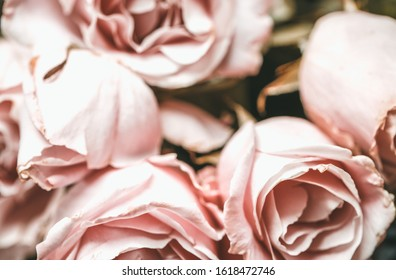 Extreme close up light pink vintage style wedding bouquet. Florist concept - closeup bunch of roses full frame with selective focus. Pink retro style flowers macro photography wallpaper copy space.