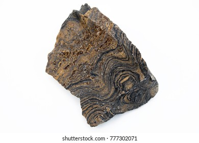 extreme close up of stromatolite mineral isolated over white background in focus stack technique