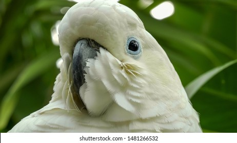 extreme close up of a sulphur crested cockatoo
