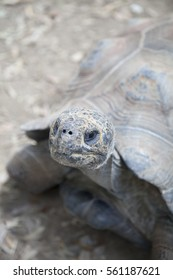 Extreme close up of a tortoise looking up