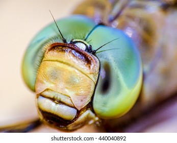 Extreme close view of Dragonfly's compound eyes