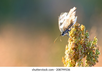extreme closeup of butterfly on meadow - stock photo