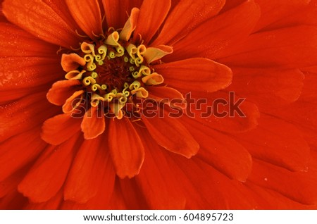 Extreme close-up of center of red flower