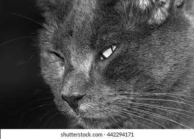 An Extreme Closeup of a Feral Domestic Cat. This Image Has Been Edited Into Black and White