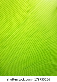 Extreme close-up of fresh green leaf as background
