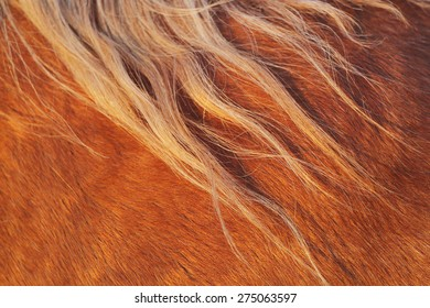 Extreme close-up of the hair and manes of a horse during sunset