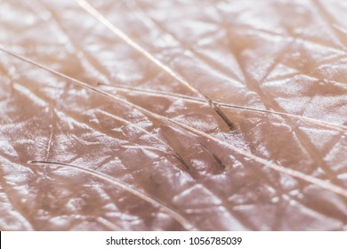 An extreme close-up macro detail microscopic image of a human hairs.
