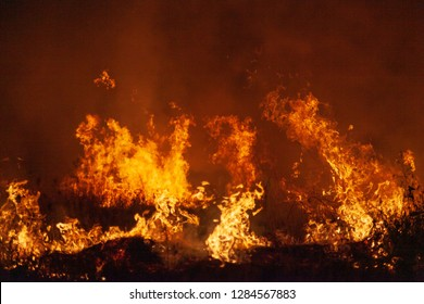 Extreme closeup of raging grass wildfire at night. Inspiration for danger, bushfire warning, summer bushfires posters or memes. Wallpaper or background of intense colour or color