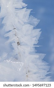 Extreme frost with ice leaves on the branch of grass