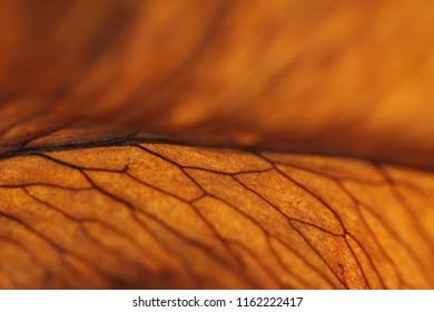 extreme macro - autumm foliage