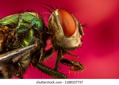 extreme macro insects