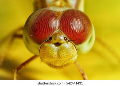 Extreme macro shot eye of dragonfly in wild. Close up detail of eye dragonfly is very small. Dragonfly on yellow leave. Selective focus.