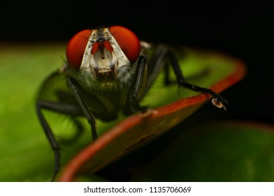 Extreme macro shot of the housefly on the leaf and nature background. A pair of large eyes cover most of the housefly's head. Details big eye of housefly is wonderful and so beautiful. Selective focus