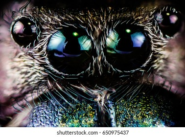 Extreme macro of spiders eyes