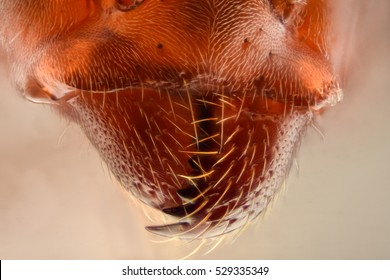 Extreme magnification - Ant jaws