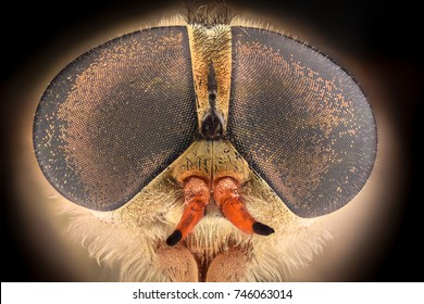 Extreme magnification - Horsefly under the microscope