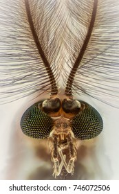 Extreme magnification - Mosquito head