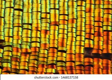 Extreme magnification - Sunset moth wing scales , Chrysiridia rhipheus