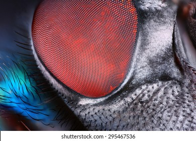 Extreme sharp and detailed fly compound eye surface taken at extreme magnification with Mitutoyo microscope objective.