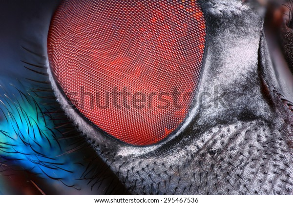 Extreme Sharp Detailed Fly Compound Eye Stock Photo (Edit