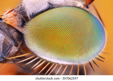 Extreme sharp and detailed study of metallic eye of unknown fly taken with 10x microscope objective stacked from many shots into one very sharp photo.