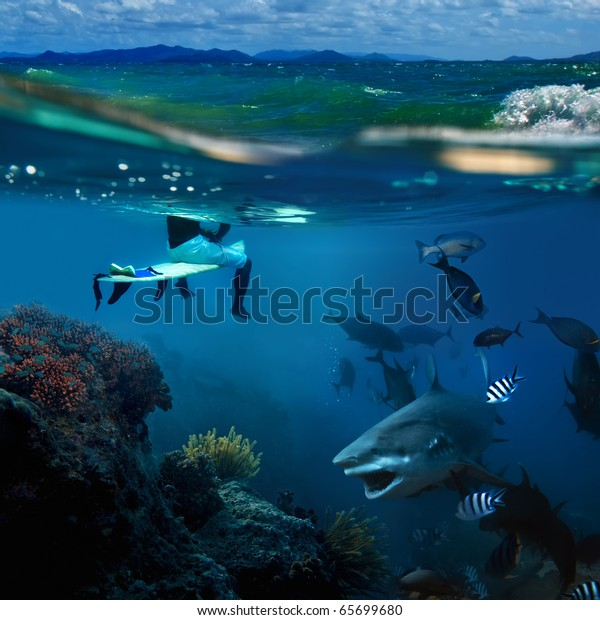 extreme story about the ocean and the surfer that sitting on a surfing board and angry hungry bull-shark surrounded by shoal of fish swimming underwater underneath him