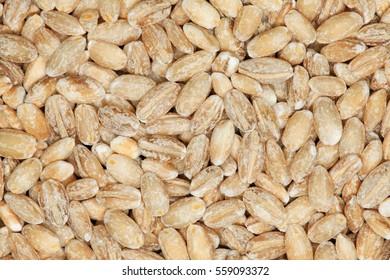 Extreme up-close of pearl barley grains. Barley porridge details