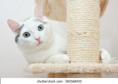 Extremely beautiful cat lying on the scratching post