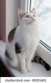 Extremely beautiful cat sitting on the window sill and looking up