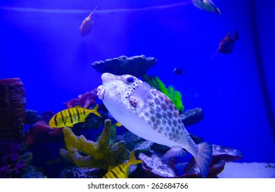 extremely bright and colorful tropical sea fish
