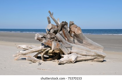 Extremely large piece of driftwood on the beach at Cumberland Island, Georgia