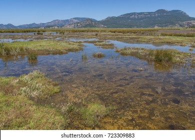Extremely salty marsh on seaside with blue sky; Iztuzu Beach is a 4.5 km long beach near Dalyan, in the Ortaca district of the Province of Mugla in southwestern Turkey