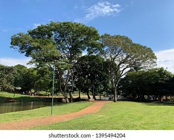 Exuberant nature at the park in Goiania, Goias, Brazil