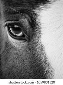 Eye of a beautiful horse closeup