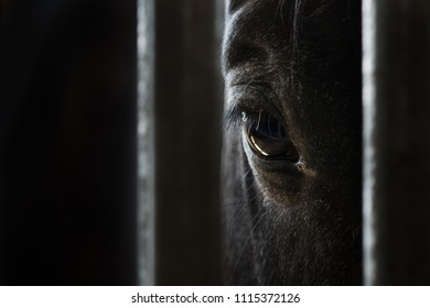 Eye of a beautiful horse closeup on dark background