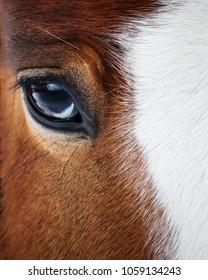 Eye of a beautiful red horse closeup