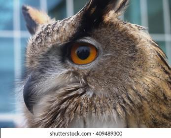 The eye of the bird - 0007337