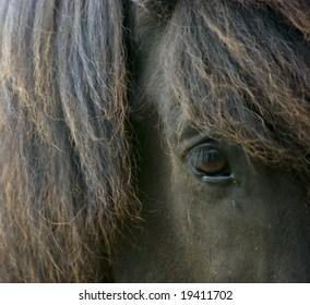 Eye of an black icelandic horse