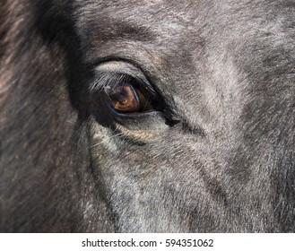 Eye brown horse close-up