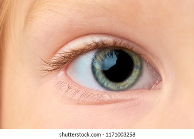 eye close-up with protein and in color