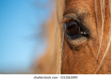 Eye closeup of a wild horse on a mountain in the welsh brecon beacons park countryside, Wales, UK