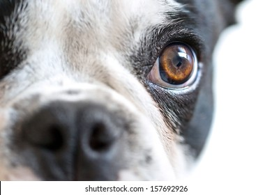 Eye contact with dangerous looking dog